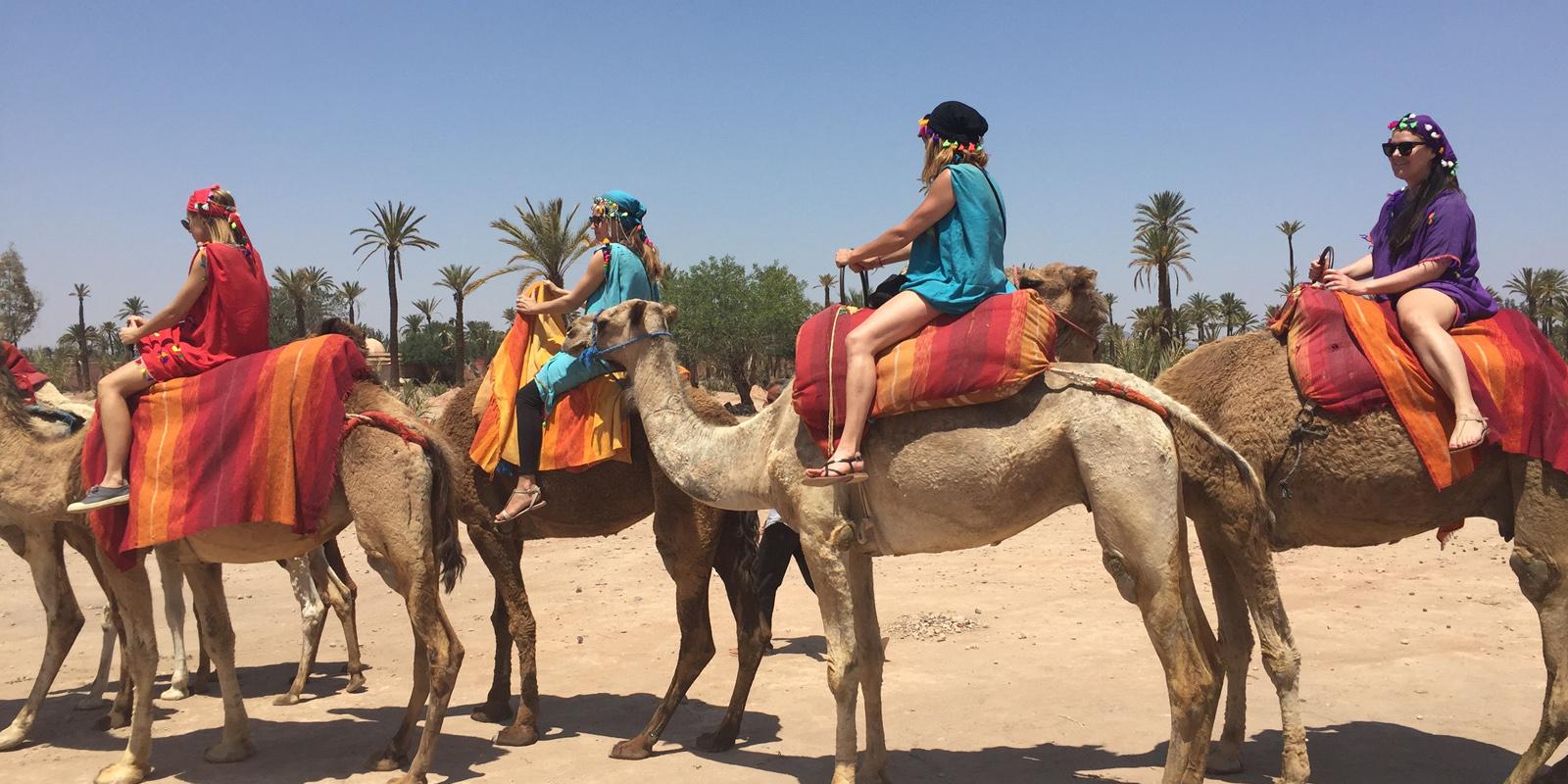 Marrakech : Balade au dos de dromadaire | MTM EXCURSION MAROC