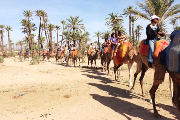 Marrakech  Balade au dos de dromadaire|caravane dromadaire